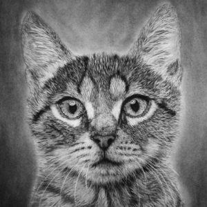 Cat40x50cm