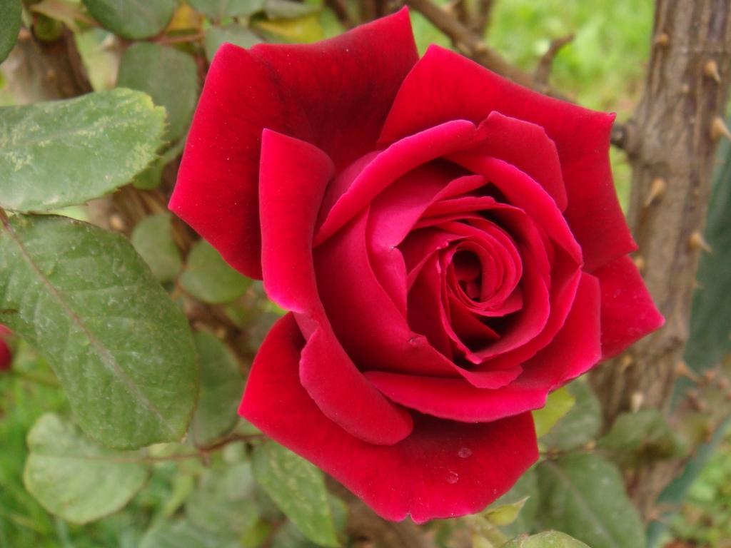 Image courtesy of segmation.com