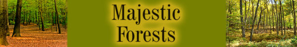 Majestic Forests