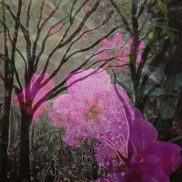 The_Enchanted_Garden-257x257