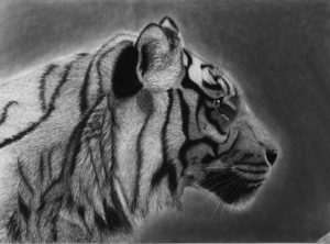Tiger 60x90cm