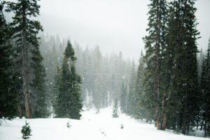 https://pixabay.com/en/snow-snowing-trees-evergreen-1246175/